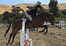 Cooper - Gelding in Daly City, CA