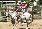 Quarter Horse Gelding for Sale in Orland, California