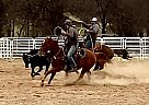 Tex - Gelding in Grapeland, TX