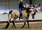 BH Sandman++/ - Stallion in Custer, SD