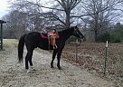 - Gelding in Phenix City, AL