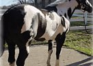 - Stallion in Kenosha, WI