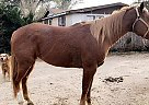 Paint Mare for Sale in Garden City, Kansas