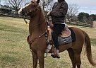 - Gelding in Danbury, TX
