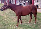 Quarter Horse Gelding for Sale in Baton Rouge, Louisiana