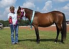 Spanish Mustang Mare for Sale in Bossier City, Louisiana