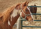 - Gelding in Middletown, MD