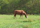 - Stallion in Belton, MO