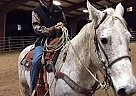 Gus bus - Gelding in Camas, WA