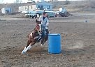 Paint Gelding for Sale in Delta, Colorado