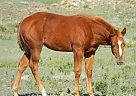 Paint Mare for Sale in Hoxie, Kansas