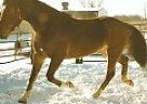 Other Mare for Sale in Shiphewana, Indiana