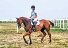 Peerage - Gelding in McGregor, TX