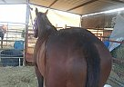 Bald is beatiful - Gelding in Phoenix, AZ