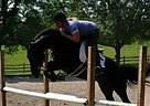 - Gelding in Bedminster, NJ