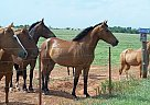 - Stallion in Lawton, OK