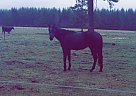 - Stallion in Chehalis, WA