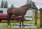 Squawk Ident - Gelding in Vancouver, WA