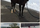 - Gelding in Fairview, PA