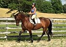 - Gelding in Signal Mountain, TN