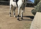 - Gelding in Lakeside, CA
