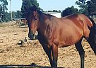 Stormy - Mare in Citrus Heights, CA