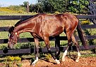 Richie - Gelding in McDonough, GA