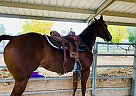 Freckle Fame - Mare in Marana, AZ