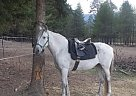 Welsh Cob Mare for Sale in Priest River, Idaho