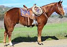 PAR CHEX DECK - Gelding in Oak View, CA