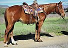 Quarter Horse Gelding for Sale in Oak View, California