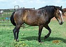 - Stallion in Elgin, OK