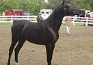 - Stallion in Bloomfield, IA