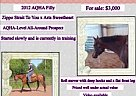 Appendix Mare for Sale in Hurley, Wisconsin