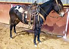 Blue - Gelding in Stinnett, TX