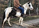 Paint Pony Mare for Sale in Denver, North Carolina