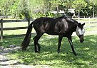 - Stallion in Tarpon Springs, FL