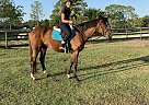 Penelope - Mare in Palm Coast, FL