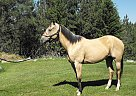 Tana - Mare in Sedro-Woolley, WA