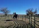 - Gelding in Willcox, AZ
