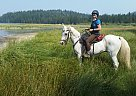 Alano - Gelding in Bend, OR