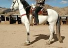 Andalusian Stallion for Sale in Apple Valley, California
