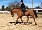 - Gelding in Virginia Beach, VA