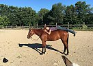 Magic - Mare in Harwinton, CT
