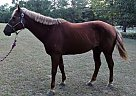 Princess - Mare in Elgin, SC