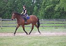 Forrest - Gelding in Le Roy, NY