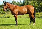 - Stallion in Caledon, ON
