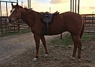 - Gelding in Murray, KY