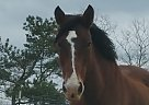 - Gelding in Flowery Branch, GA