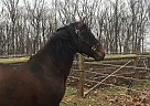- Stallion in Spring Grove, PA